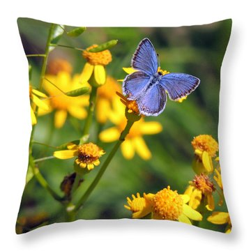 A Little Blue Throw Pillow