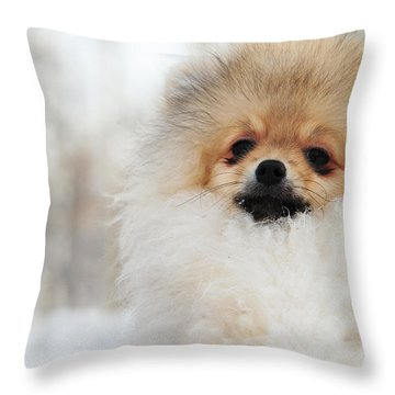 A Little Cutie Throw Pillow by Jenny Rainbow