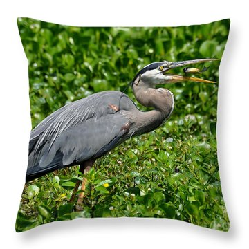 Throw Pillow featuring the photograph A Little Snack by Kathy Baccari
