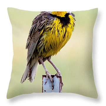 A Little Wet Throw Pillow by Brian Williamson