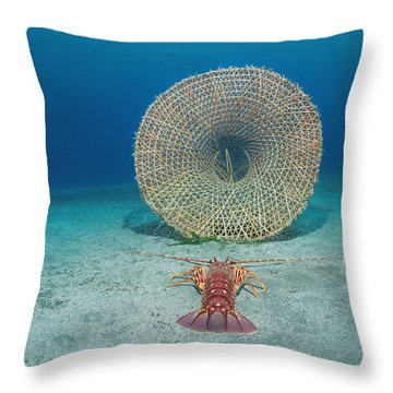 A Lobster Heads For A Trap Throw Pillow