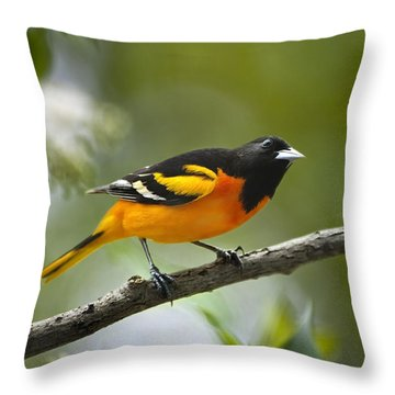 A Look To Remember Throw Pillow by Christina Rollo