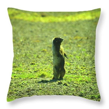 A Marmon Checking Things Out  Throw Pillow