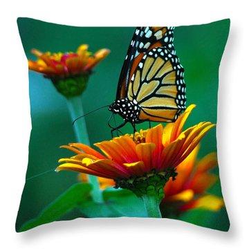 A Monarch II Throw Pillow by Raymond Salani III