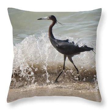 A Morning Stroll Interrupted Throw Pillow by Gary Slawsky