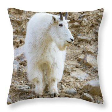 A Mountain Goat On Watch In The Big Throw Pillow