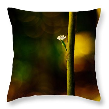 A New Beginning Throw Pillow by Darryl Dalton