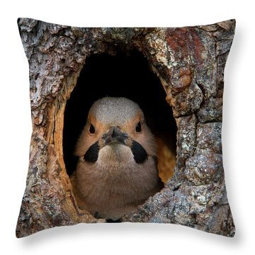 A Northern Flicker In The Hollow Throw Pillow