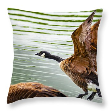 A Pair Of Canada Geese Landing On Rockland Lake Throw Pillow by Jerry Cowart