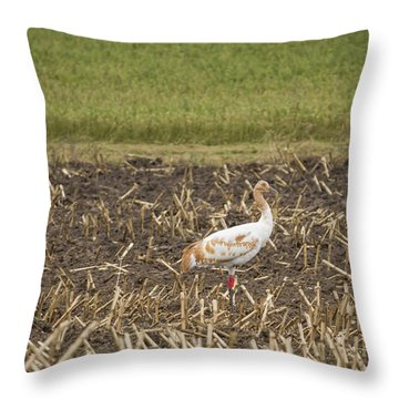 A Pair Of Dar Whooping Cranes Throw Pillow