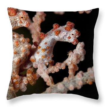 A Pair Of Pygmy Seahorse On Sea Fan Throw Pillow by Steve Jones