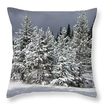 A Patch Of Sun Throw Pillow by Shane Bechler