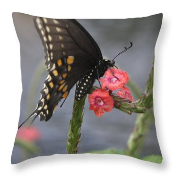 A Pause In Flight Throw Pillow by Judith Morris