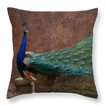 A Peacock Throw Pillow by Ernie Echols