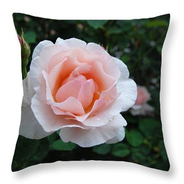A Pink Rose For You Throw Pillow by Eva Kaufman