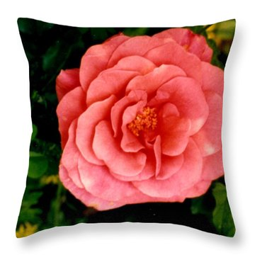 Throw Pillow featuring the photograph A Pink Rose by Mary Armstrong