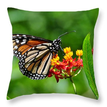 A Place To Settle Down Throw Pillow