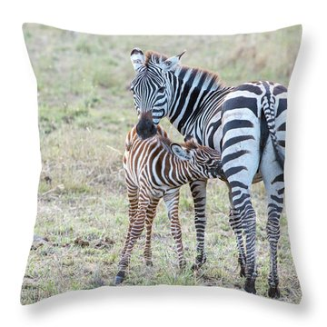 A Plains Zebra, Equus Quagga, Nursing Throw Pillow
