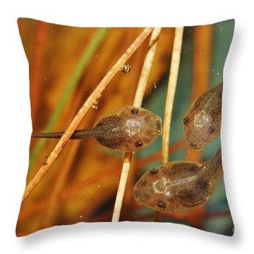 A Pod Of 'poles Throw Pillow by Lynda Dawson-Youngclaus