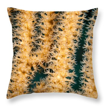 A Polyp Line Throw Pillow by Jean Noren