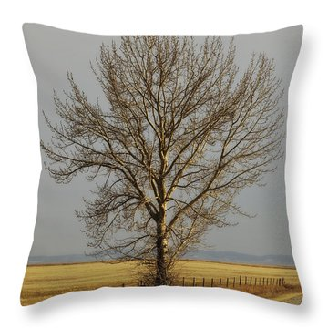 A Poplar Tree By The Side Of A Gravel Throw Pillow by Roberta Murray