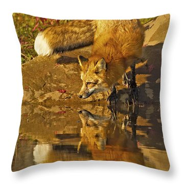 A Real Fox Throw Pillow