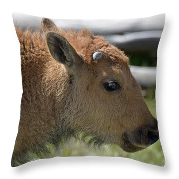 A Red Dog In Yellowstone Throw Pillow by Bruce Gourley