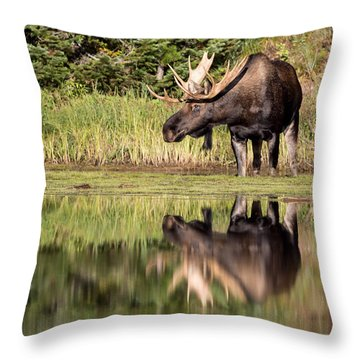 A Reflective Mood Throw Pillow by Jack Bell