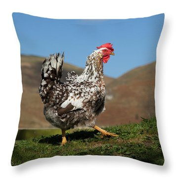 A Rooster  Cheviots, Northumberland Throw Pillow