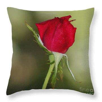Throw Pillow featuring the photograph A Rose By Any Other Name by Debby Pueschel