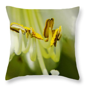 A Single Flower In Full Bloom Throw Pillow by Carol F Austin