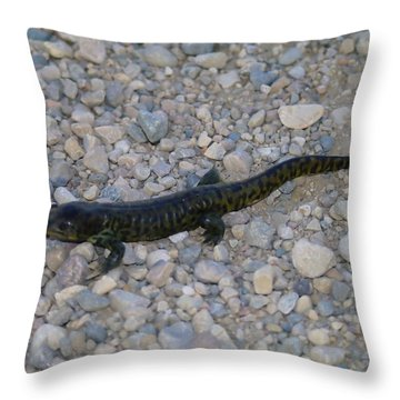 A Slow Salamander  Throw Pillow