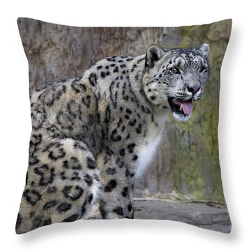 A Snow Leopards Tongue Throw Pillow by David Millenheft