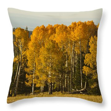 A Splendid Afternoon Throw Pillow by Tom Kelly