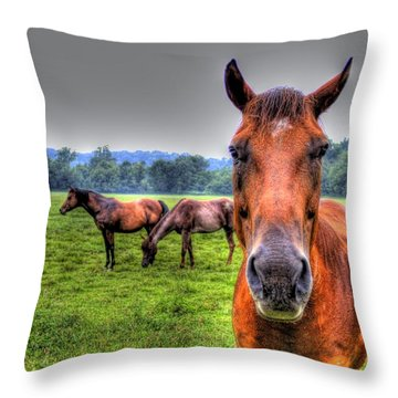 Throw Pillow featuring the photograph A Starring Horse by Jonny D