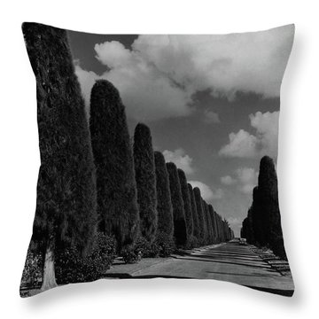 A Street Lined With Cypress Trees Throw Pillow