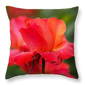 A Tintinara Rose In The Rain Throw Pillow by Rona Black