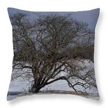A Tree In Canaan 2 Throw Pillow by Randy Bodkins