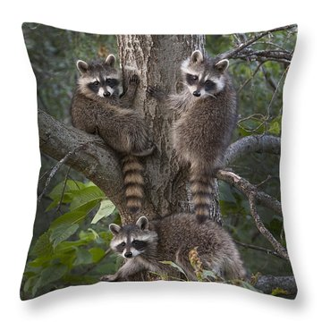 A Tri Of Bandits Throw Pillow