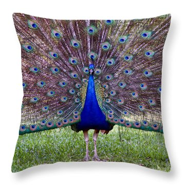 A Vargos Peacock Throw Pillow by Tim Stanley