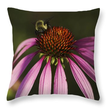 Throw Pillow featuring the photograph A Visitor - A Bee On A Coneflower by Jane Eleanor Nicholas