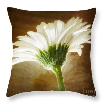 A White Gerber Daisy Against A Vintage Backdrop Throw Pillow by MaryJane Armstrong