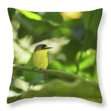 A Yellow-lored Tody Flycatcher Throw Pillow
