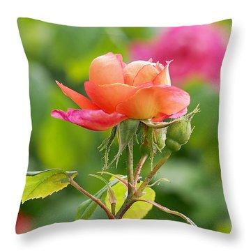 A Young Benjamin Britten Rose Throw Pillow by Rona Black