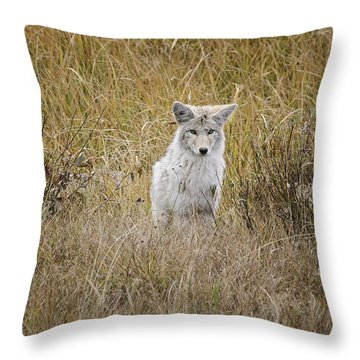 Throw Pillow featuring the photograph A Young Hunter by Gary Hall