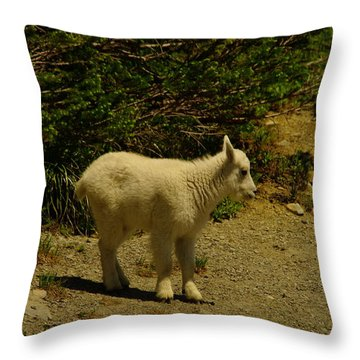 A Young Mountain Goat Throw Pillow by Jeff Swan