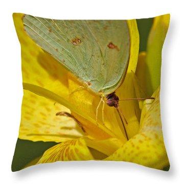 Abaeis Nicippe Sleepy Orange Throw Pillow