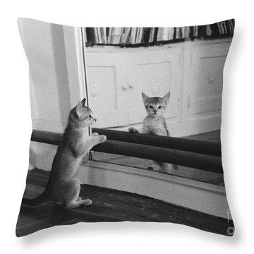 Abyssinian Kitten In Dance Studio Throw Pillow by Joan Baron