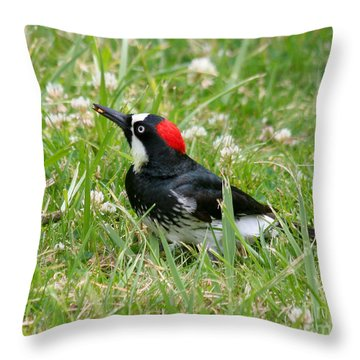 Throw Pillow featuring the photograph Acorn Woodpecker Foraging by Bob and Jan Shriner