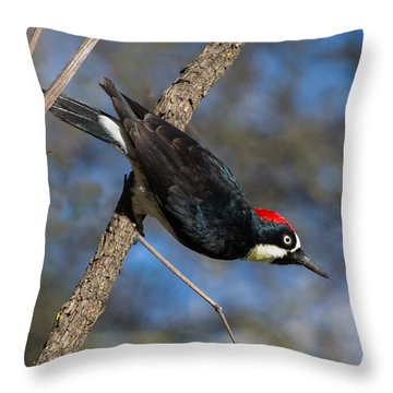 Acorn Woodpecker Throw Pillow by Rima Biswas